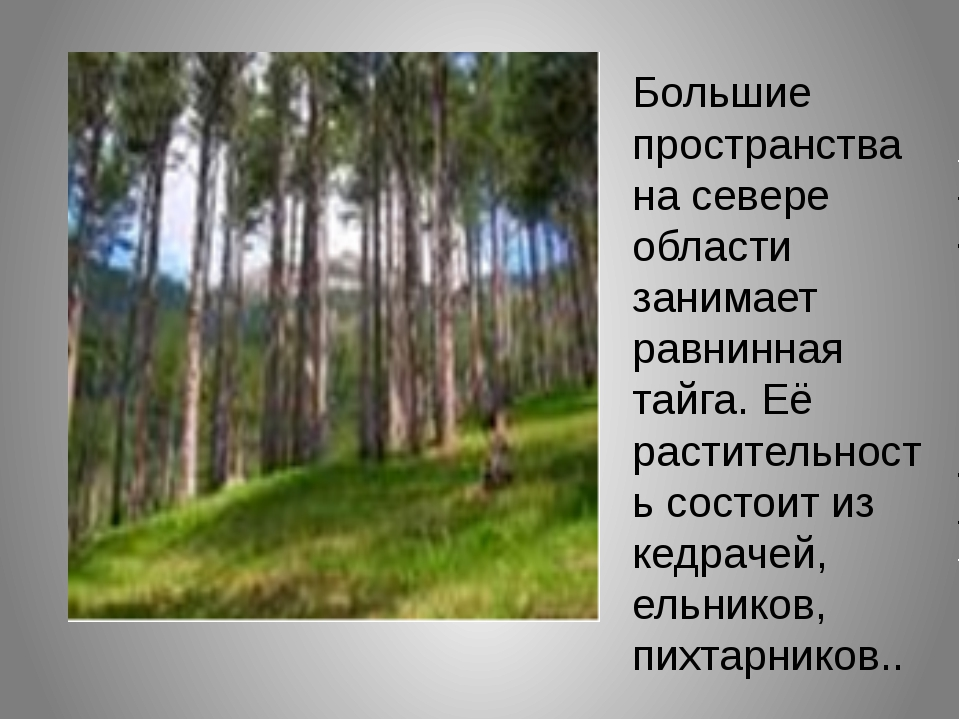 Большие пространства на севере области занимает равнинная тайга. Её раститель...