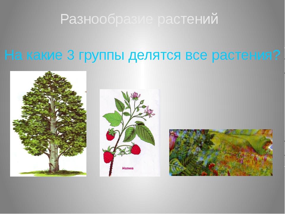 Разнообразие растений На какие 3 группы делятся все растения?