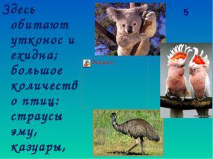 Здесь обитают утконос и ехидна; большое количество птиц: страусы эму, казуары