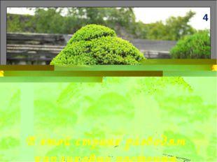 В этой стране разводят карликовые растения 4