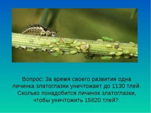 Вопрос: За время своего развития одна личинка златоглазки уничтожает до 1130
