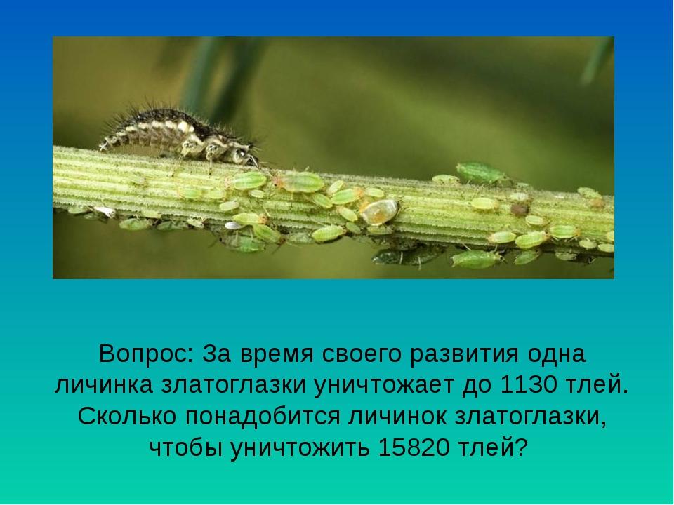 Вопрос: За время своего развития одна личинка златоглазки уничтожает до 1130...