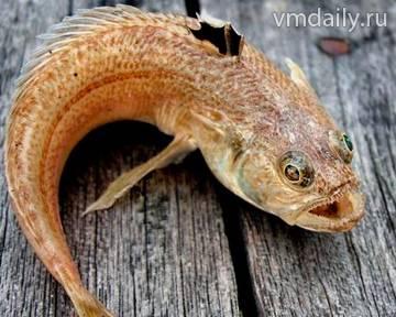 E:\Наталья 1\фото рыбы\file65wr1pazu9z1egifjk7c_800_480.jpg