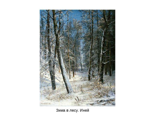 Зима в лесу. Иней