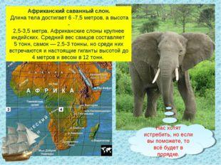 Африканский саванный слон. Длина тела достигает 6 -7,5 метров, а высота - 2,5