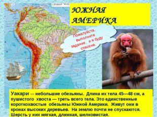 ЮЖНАЯ АМЕРИКА Уакари — небольшие обезьяны. Длина их тела 45—48 см, а пушистог