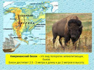 Американский бизон - это вид полорогих млекопитающих, быков. Бизон достигае