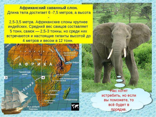 Африканский саванный слон. Длина тела достигает 6 -7,5 метров, а высота - 2,5...