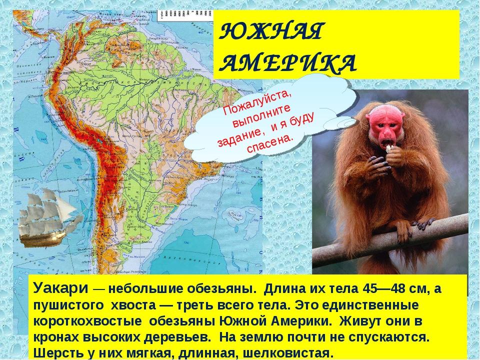 ЮЖНАЯ АМЕРИКА Уакари — небольшие обезьяны. Длина их тела 45—48 см, а пушистог...