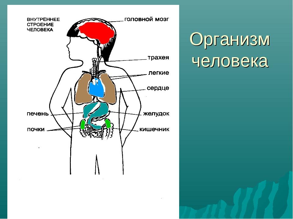 как вылечиться от паразитов в организме