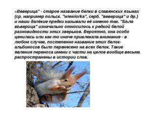 """«Веверица"""" - старое название белки в славянских языках (ср. например польск."""