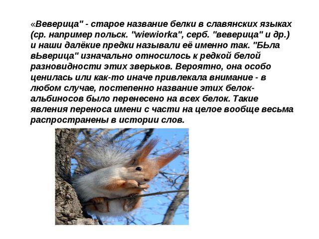 """«Веверица"""" - старое название белки в славянских языках (ср. например польск...."""