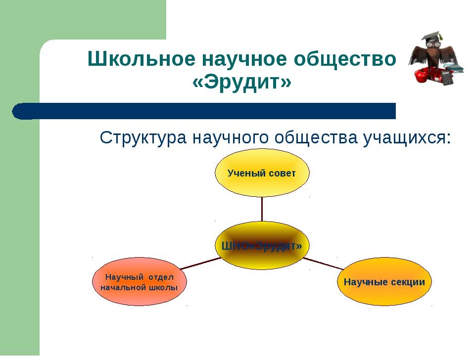 Школьное научное общество «Эрудит» Структура научного общества учащихся: