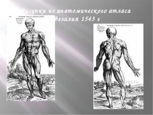 Уильям Гарвей 1587-1657 Основатель рождения и развития современной физиологии