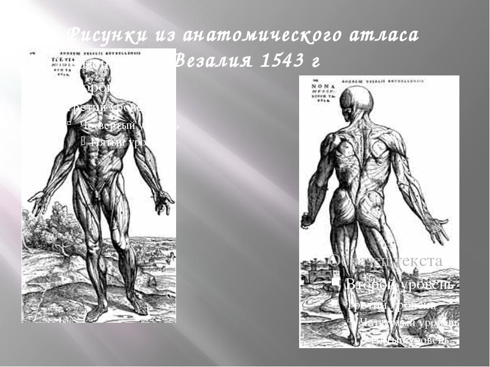 Уильям Гарвей 1587-1657 Основатель рождения и развития современной физиологии...