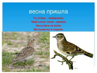 весна пришла Ты птица – жаворонок, Твой голос тонок –звонок, Неси,неси на вол