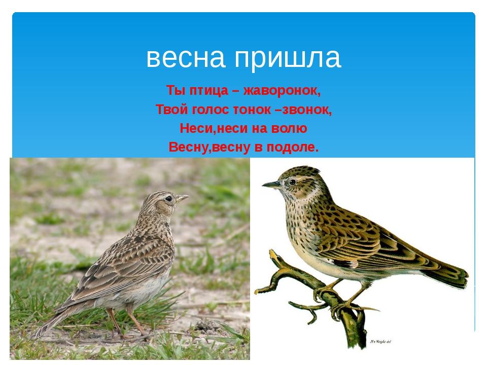 весна пришла Ты птица – жаворонок, Твой голос тонок –звонок, Неси,неси на вол...