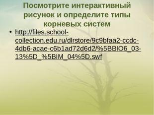Посмотрите интерактивный рисунок и определите типы корневых систем http://fil