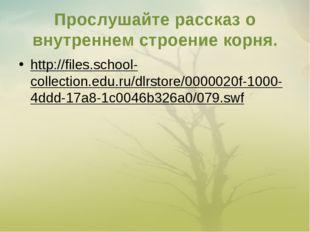 Прослушайте рассказ о внутреннем строение корня. http://files.school-collecti