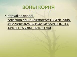 ЗОНЫ КОРНЯ http://files.school-collection.edu.ru/dlrstore/2c12347b-730a-4f8c-