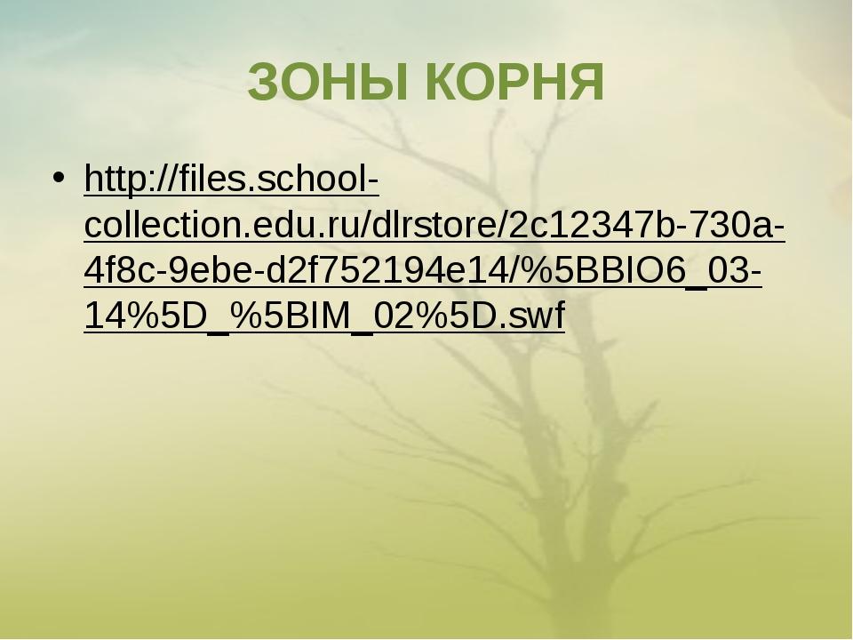 ЗОНЫ КОРНЯ http://files.school-collection.edu.ru/dlrstore/2c12347b-730a-4f8c-...