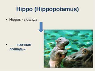Hippo (Hippopotamus) Hippos - лошадь «речная лошадь» Potamus - река