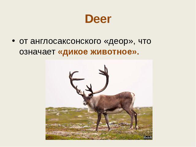 Deer от англосаксонского «деор», что означает «дикое животное».