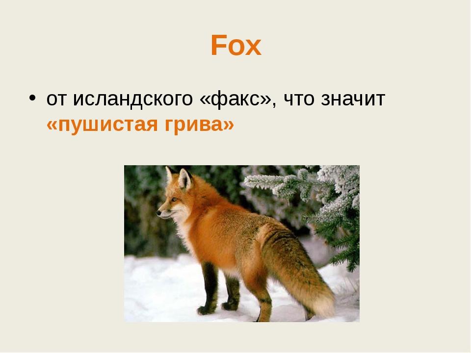 Fox от исландского «факс», что значит «пушистая грива»