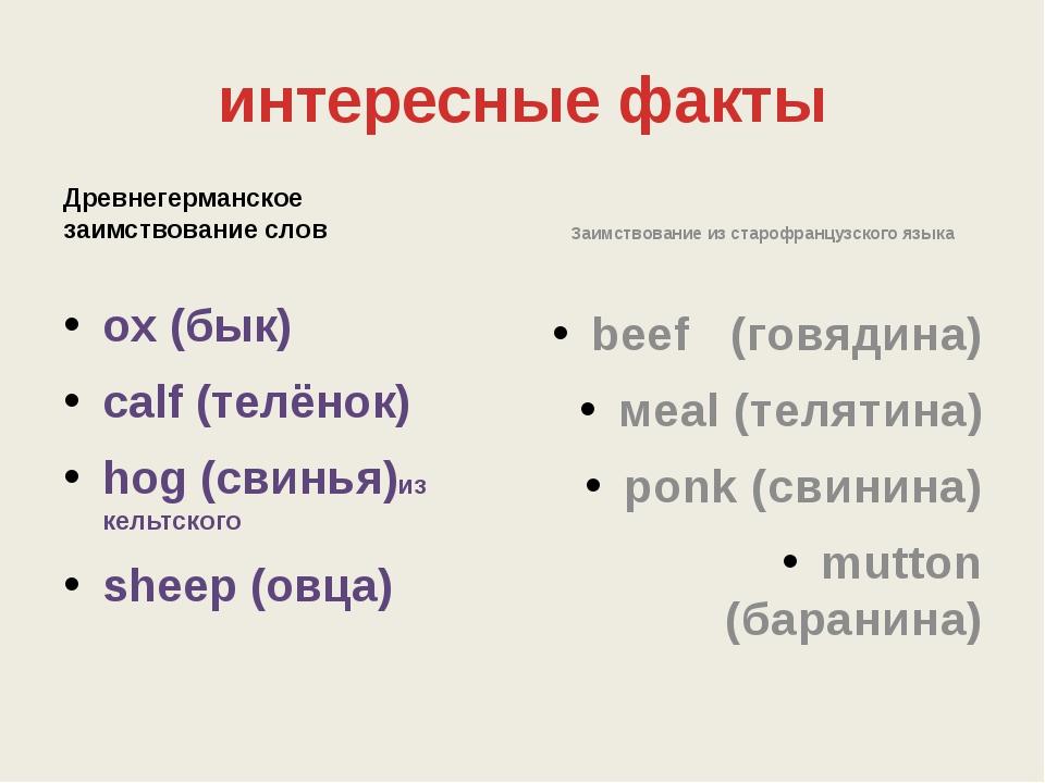 интересные факты Древнегерманское заимствование слов ox (бык) calf (телёнок)...