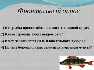 Фронтальный опрос 1) Как рыбы приспособлены к жизни в водной среде? 2) Какое