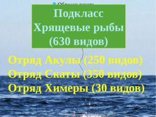 Подкласс Хрящевые рыбы (630 видов) Отряд Акулы (250 видов) Отряд Скаты (350
