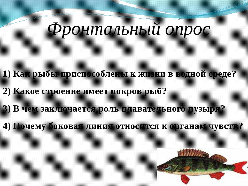 Фронтальный опрос 1) Как рыбы приспособлены к жизни в водной среде? 2) Какое...