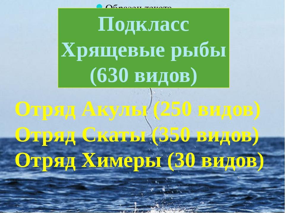 Подкласс Хрящевые рыбы (630 видов) Отряд Акулы (250 видов) Отряд Скаты (350...