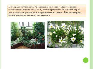"""В природе нет понятия """"комнатное растение"""". Просто люди захотели озеленить св"""