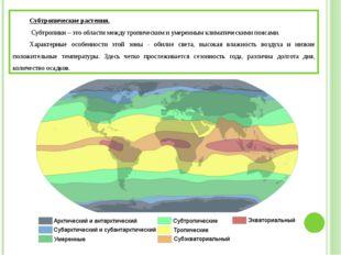 Субтропические растения. Субтропики – это области между тропическим и умерен