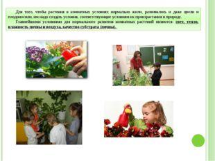Для того, чтобы растения в комнатных условиях нормально жили, развивались и д