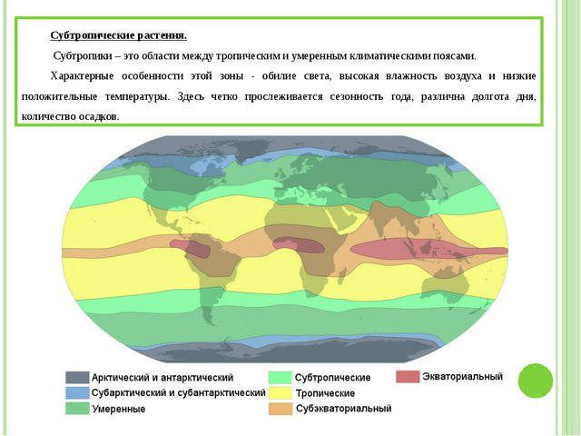 Субтропические растения. Субтропики – это области между тропическим и умерен...