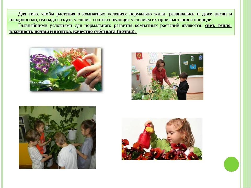 Для того, чтобы растения в комнатных условиях нормально жили, развивались и д...