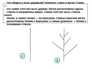 Что общего у всех деревьев? Конечно, ствол и ветки. Ствол — это самая толста
