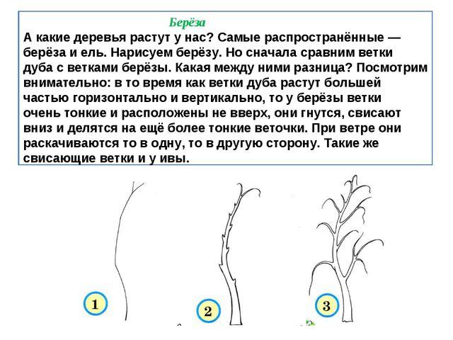 Берёза А какие деревья растут у нас? Самые распространённые — берёза и ель....