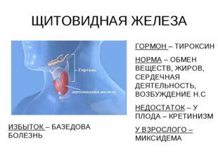 ЩИТОВИДНАЯ ЖЕЛЕЗА ГОРМОН – ТИРОКСИН НОРМА – ОБМЕН ВЕЩЕСТВ, ЖИРОВ, СЕРДЕЧНАЯ Д