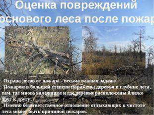 Охрана лесов от пожара - весьма важная задача; Пожаром в большей степени пора