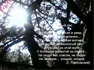 Мертвый лес Пожар отклокотал и умер. И умер лес, отзеленел… Стоял, как братск