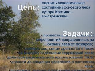 оценить экологическое состояние соснового леса хутора Костино – Быстрянский.