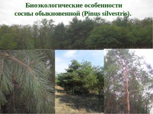 Биоэкологические особенности сосны обыкновенной (Pinus silvestris).