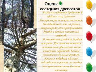 Оценка В ходе исследования древостоя в хвойном лесу Костино-Быстрянского сель