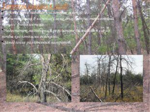 Гипотезы усыхания лесов: Прямое возделывание кислотных осадков; Избыток озона