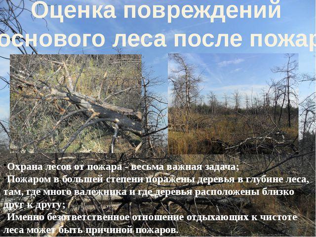 Охрана лесов от пожара - весьма важная задача; Пожаром в большей степени пора...