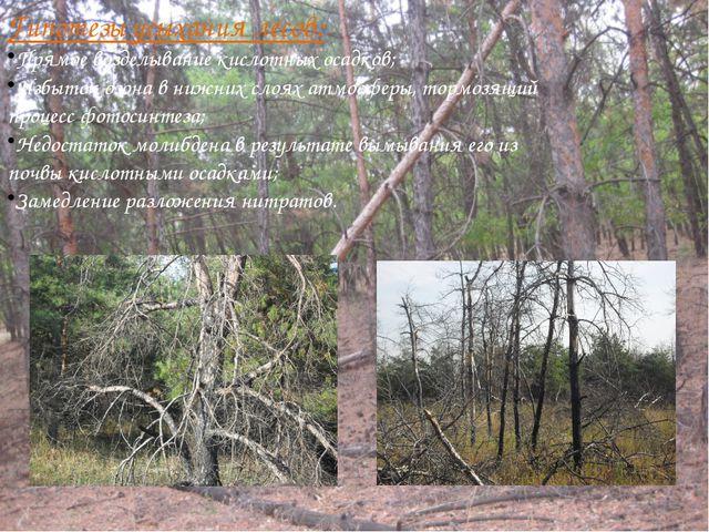 Гипотезы усыхания лесов: Прямое возделывание кислотных осадков; Избыток озона...