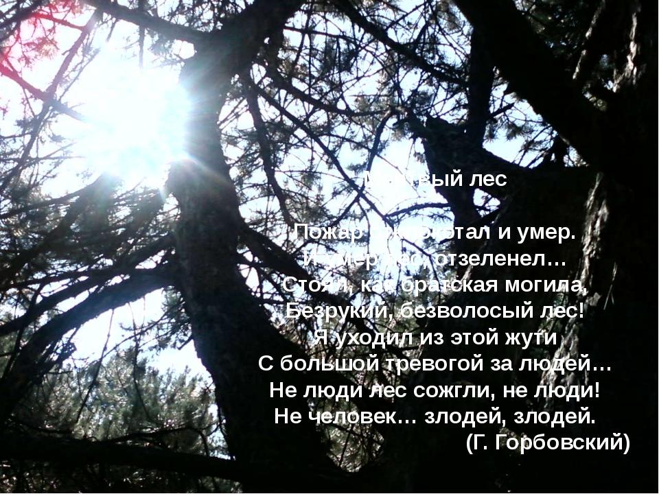 Мертвый лес Пожар отклокотал и умер. И умер лес, отзеленел… Стоял, как братск...